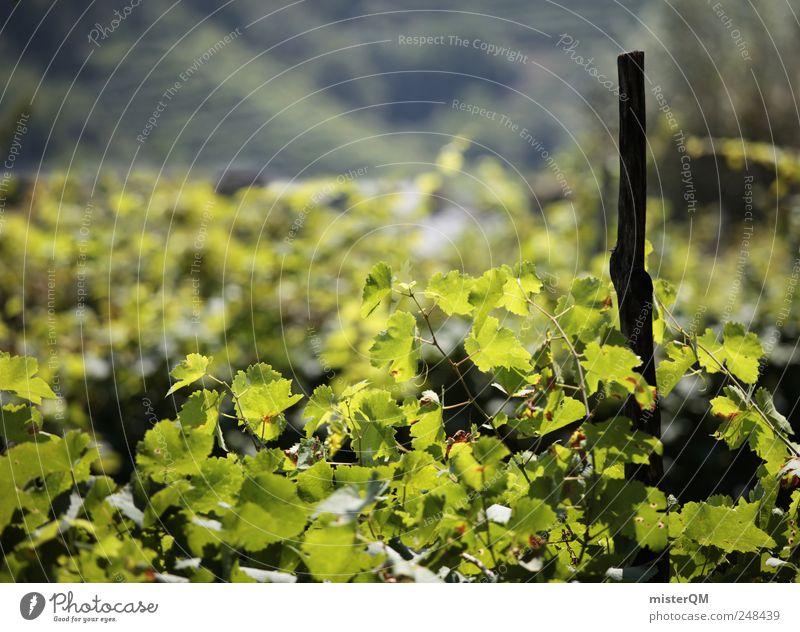Südhang. Natur grün Pflanze Blatt ruhig Umwelt Landschaft ästhetisch Wachstum Wein Hügel Ernte reif Tradition Berghang Qualität