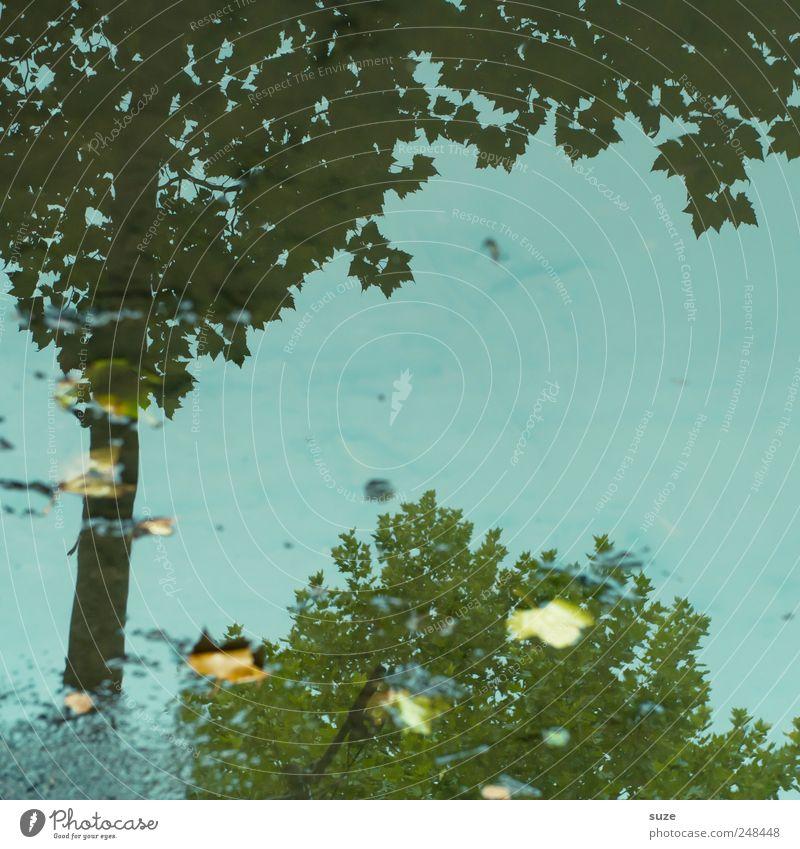 Sommer im Herbst Umwelt Natur Wasser Wetter Baum Blatt authentisch dreckig dunkel nass natürlich blau herbstlich Baumkrone Pfütze Wasseroberfläche Herbstlaub