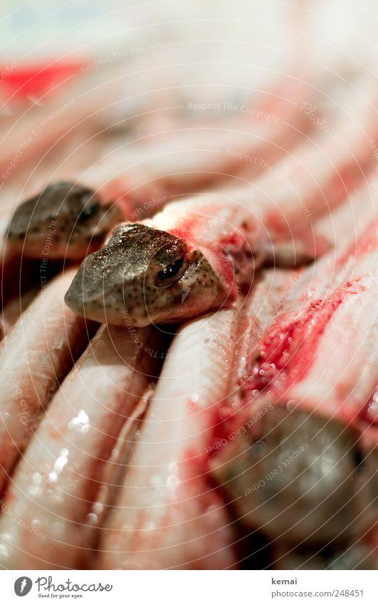 Fischköpfe Lebensmittel Meeresfrüchte Ernährung Marktstand Fischmarkt Tier Nutztier Tiergesicht Kopf liegen Ekel frisch hell schleimig Tod Stapel Farbfoto