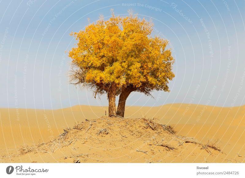 Himmel Natur Ferien & Urlaub & Reisen Pflanze schön Landschaft Baum Erholung Einsamkeit Wolken Freiheit Sand Park Aussicht Abenteuer Frieden