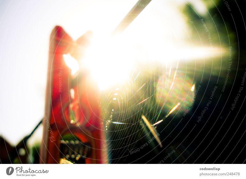 toile d'aurore Garten ästhetisch Wärme Erwartung Wäscheleine Wäscheklammern Haushalt Spinnennetz Außenaufnahme Schatten Kontrast Lichterscheinung Sonnenlicht
