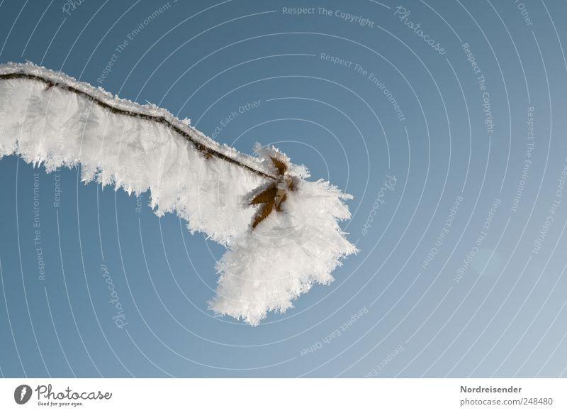Starre Natur Wolkenloser Himmel Winter Klima Schönes Wetter Eis Frost Schnee Pflanze Wildpflanze frieren glänzend warten ästhetisch kalt blau weiß stagnierend