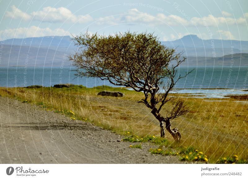 Island Natur Baum Pflanze Meer Berge u. Gebirge Landschaft Umwelt Wege & Pfade Wachstum wild natürlich Hügel Fjord Anpassung Windflüchter