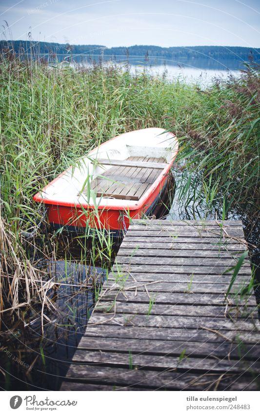 love boat Natur Wasser grün blau Pflanze rot Sommer Ferien & Urlaub & Reisen ruhig See Wasserfahrzeug Horizont Schilfrohr Steg Holzbrett Mecklenburg-Vorpommern