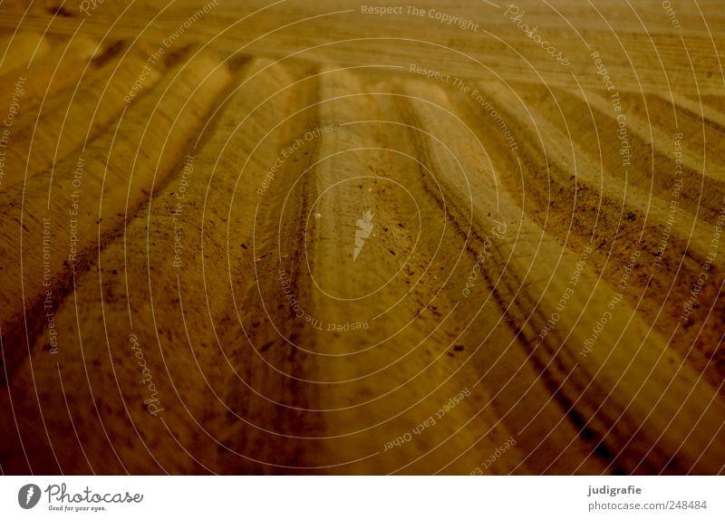 Acker Natur Landschaft Linie Feld Erde Ordnung Landwirtschaft Forstwirtschaft gepflügt Spargelfeld