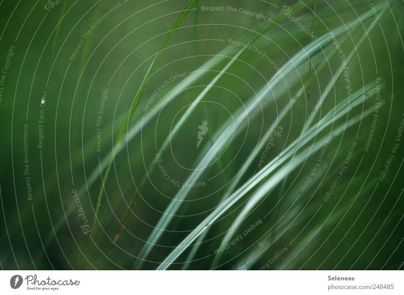es grünt so grün Umwelt Natur Landschaft Wassertropfen Frühling Sommer Regen Pflanze Gras Sträucher Grünpflanze Garten Park Wiese nah nass natürlich abstrakt