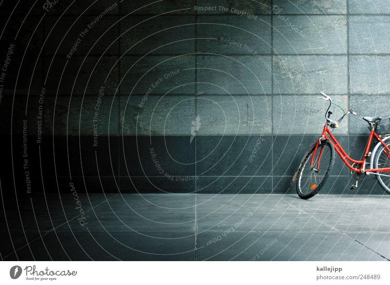 liebhaberstück Lifestyle Haus Verkehr Verkehrsmittel Fahrrad nachhaltig Güterverkehr & Logistik Bewegung Oldtimer Farbfoto Innenaufnahme Menschenleer Licht