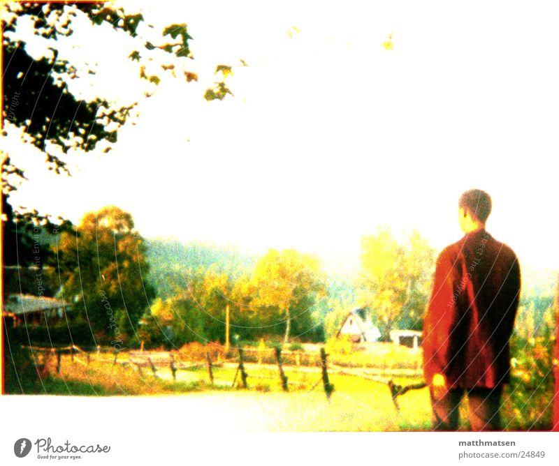 weit weg Baum Denken Wiese hart Physik gelb Mann Ferne Blick Natur nachdenken Rückansicht Wärme