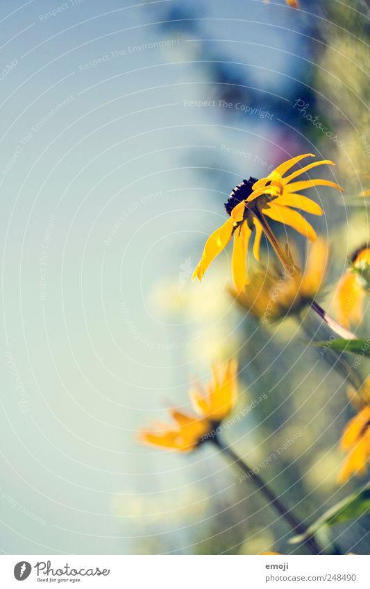 ...in the air Natur Pflanze Sommer Blume gelb Frühling natürlich Duft