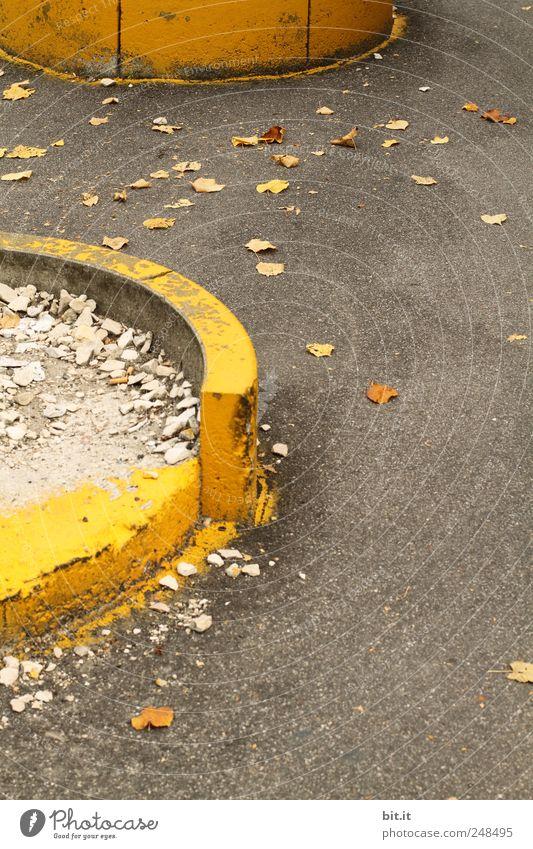 Kreis der Jahreszeiten Blatt gelb Straße Herbst Umwelt Mauer Stein Wetter gold Beton liegen Klima Boden leuchten rund Vergänglichkeit