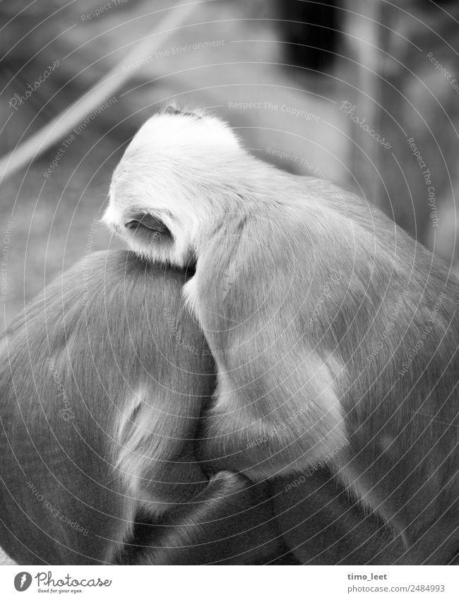Melancholie im Tierreich ruhig Liebe Traurigkeit Gefühle Zusammensein Stimmung Tierpaar sitzen authentisch berühren Schutz Trauer Zusammenhalt Vertrauen