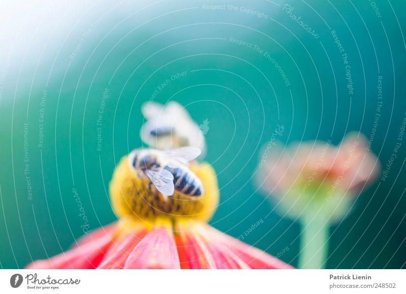 Land of milk and honey Natur Pflanze Sommer Blume Tier ruhig Erholung Umwelt Garten Wetter Zufriedenheit sitzen Wildtier Urelemente Biene Mobilität