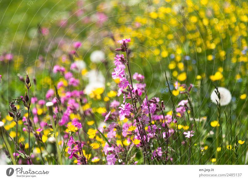 Einkaufsparadies Natur Sommer Pflanze schön Blume gelb Umwelt Frühling Blüte Wiese Garten rosa wandern Park träumen Wachstum