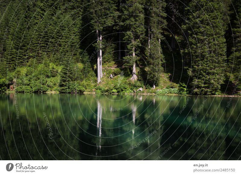 Idylle Natur Ferien & Urlaub & Reisen Sommer Pflanze grün Landschaft Baum Erholung Einsamkeit ruhig Wald Religion & Glaube Umwelt Traurigkeit Tod See