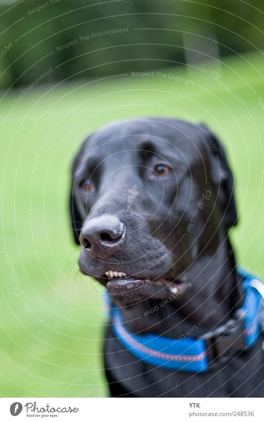 Boxer? Natur Pflanze schwarz Wiese Gras Bewegung Hund Park Freundschaft Nase Coolness retro Zähne Fell Haustier Schnauze