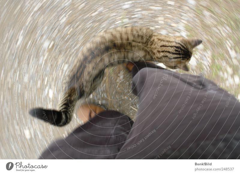 Katzenrunde harmonisch Wohlgefühl Spielen Kinderspiel Ferien & Urlaub & Reisen Tourismus Sommer Sommerurlaub Tier Haustier Fell Tigerkatze 1 Tierjunges Bewegung