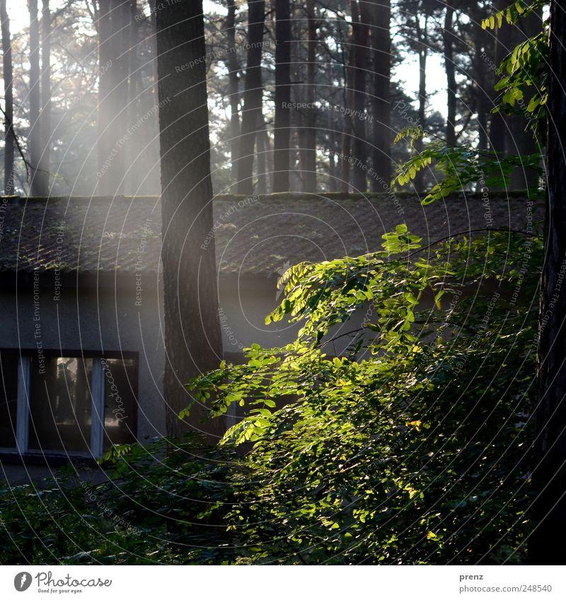 waldspaziergang Natur alt Baum Pflanze Haus Wald Fenster Landschaft Umwelt Sträucher Dach Vergänglichkeit Verfall Schönes Wetter Baracke