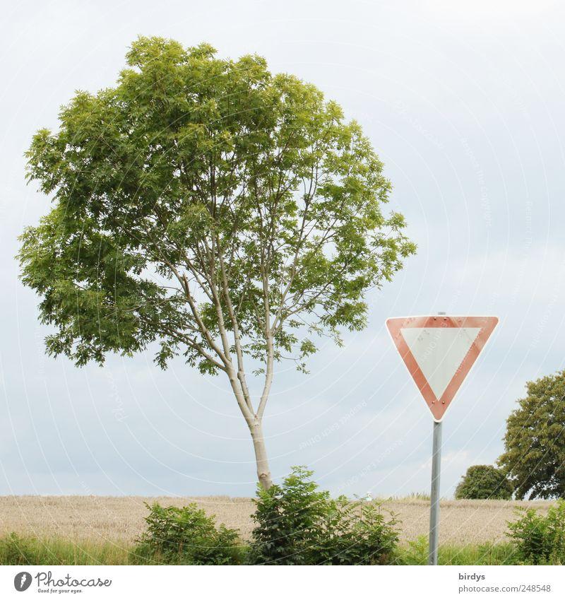 Achtung, Vorfahrt gewähren Natur grün Baum rot Sommer Wolken Blatt Landschaft Feld Horizont Schilder & Markierungen Verkehr außergewöhnlich Zeichen