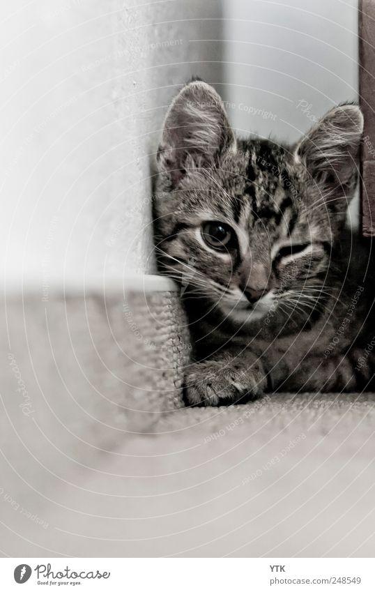 Alles klar, du gehst links und ich geh rechts rum! *zwinker* Haustier Katze beobachten Platzangst Schüchternheit Respekt Zwinkern Katzenbaby Katzenauge