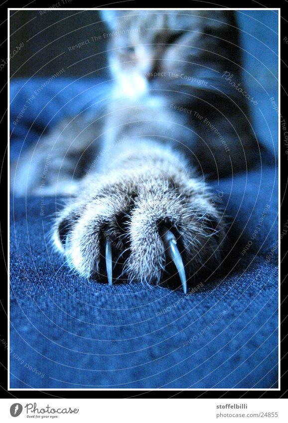 Messerscarf Katze Haustier Raubkatze