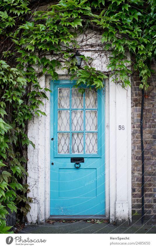 number 58 London Haus Einfamilienhaus Gebäude Architektur Mauer Wand Tür ästhetisch authentisch retro schön blau grün Eingang Eingangstür Kletterpflanzen Idylle