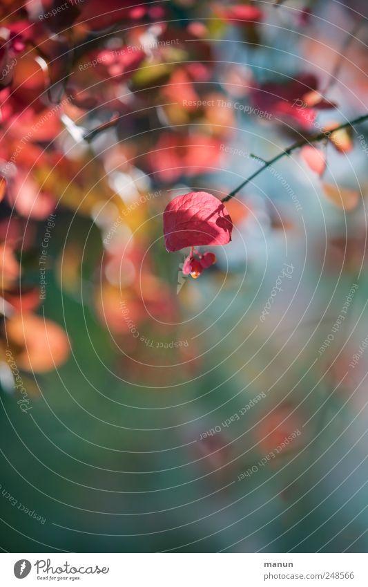 Blättchenfoto Natur Herbst Baum Blatt Zweige u. Äste herbstlich Herbstfärbung Herbstbeginn schön natürlich mehrfarbig rosa rot Farbfoto Außenaufnahme