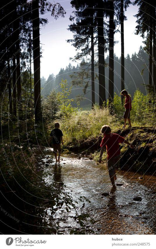 Spaß am Bach Mensch Kind Himmel Natur Wasser Jugendliche Baum Pflanze Sommer Wald Junge Landschaft Umwelt Gras Bewegung Freundschaft