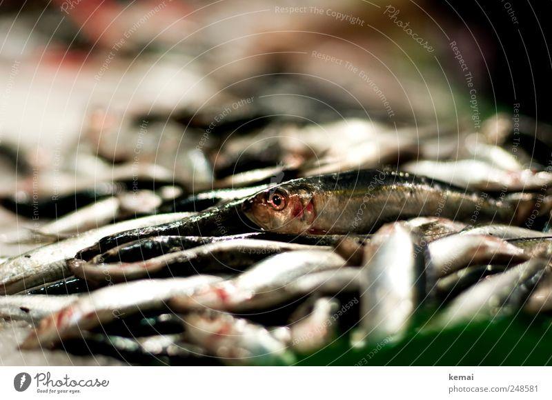 Aus der Masse rausstechen Fisch Meeresfrüchte Ernährung Abendessen Markthalle Marktstand Fischmarkt Tier Nutztier Tiergesicht Schuppen Auge liegen frisch Haufen
