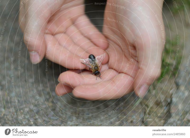 Drohn gelandet Kind Mensch Natur Hand Tier klein maskulin Haut Flügel beobachten berühren Neugier entdecken nah Insekt Vertrauen