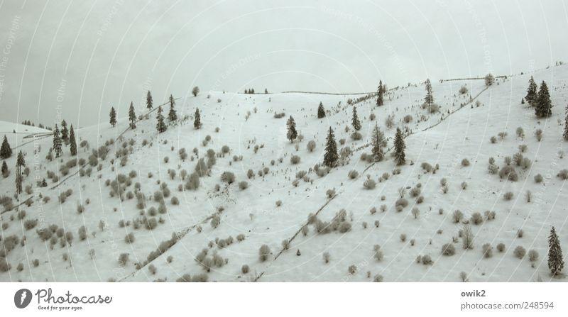 Karpatenkamm Umwelt Natur Landschaft Pflanze Himmel Wolken Winter Klima Schönes Wetter Eis Frost Schnee Baum Sträucher Wildpflanze Berge u. Gebirge Osteuropa