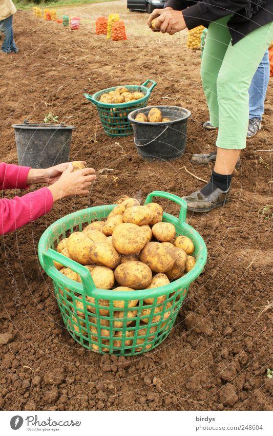 Wir schaffen zusammen... Natur Freude Menschengruppe Arbeit & Erwerbstätigkeit Zusammensein Feld Erde authentisch Ernährung Schönes Wetter Landwirtschaft viele