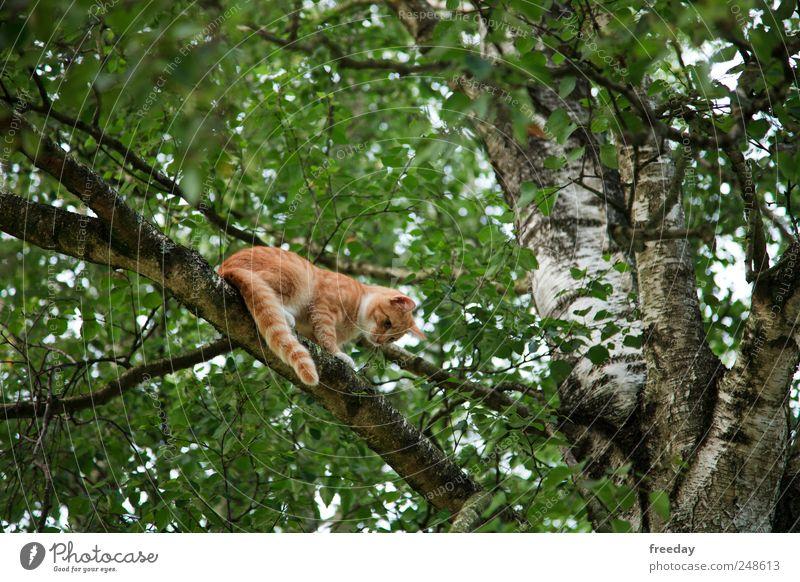 Hilfe... Natur grün Baum Blatt Tier Wald Garten Katze Park Angst warten gefährlich Macht bedrohlich Fell Jagd