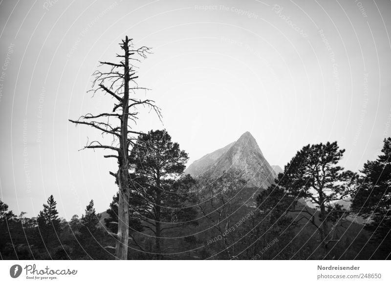 John Wayne blieb zum Essen Natur Pflanze Baum Erholung Landschaft ruhig Ferne Wald Berge u. Gebirge Ausflug Klima bedrohlich Urelemente Meditation Sinnesorgane