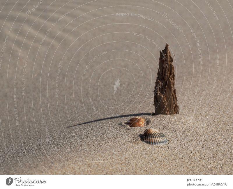 durststrecke | auf wassersuche Natur Urelemente Sand Sommer Strand stehen warten Dürre 3 Stillleben Muschel Holz Treibholz Statue Wellenform Wüste Farbfoto