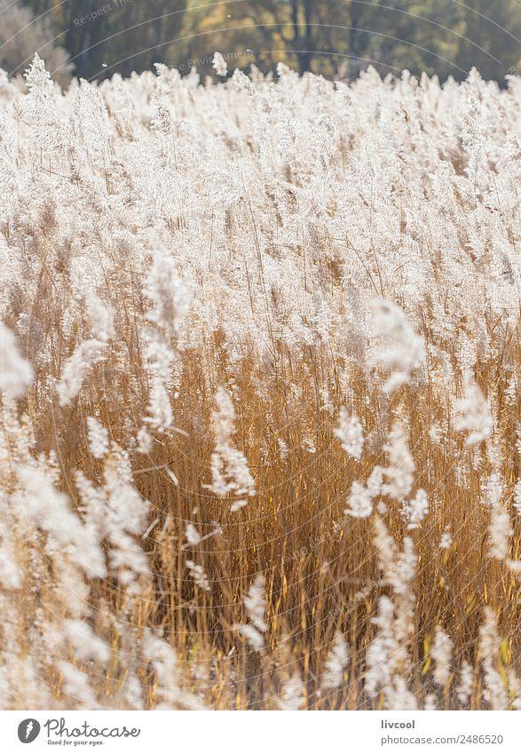 Natur Ferien & Urlaub & Reisen Pflanze schön Landschaft weiß Baum Blume Erholung ruhig Freude Wald Herbst Garten Tourismus Freiheit