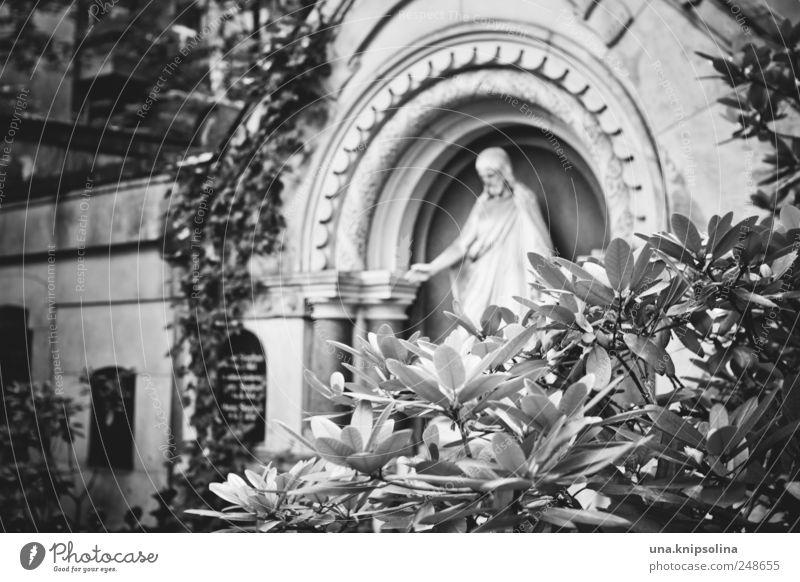 cimetière maskulin Skulptur Natur Pflanze Sträucher Efeu Blatt Rhododendron Park Friedhof Berlin Berlin-Friedenau Stein Zeichen Ornament Traurigkeit Schmerz
