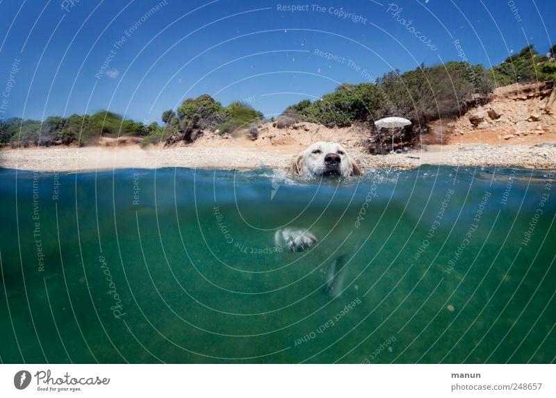 Seehund II Himmel Hund Wasser Meer Freude Tier Erholung Landschaft Bewegung Glück Freundschaft Gesundheit Arbeit & Erwerbstätigkeit blond Freizeit & Hobby Schwimmen & Baden