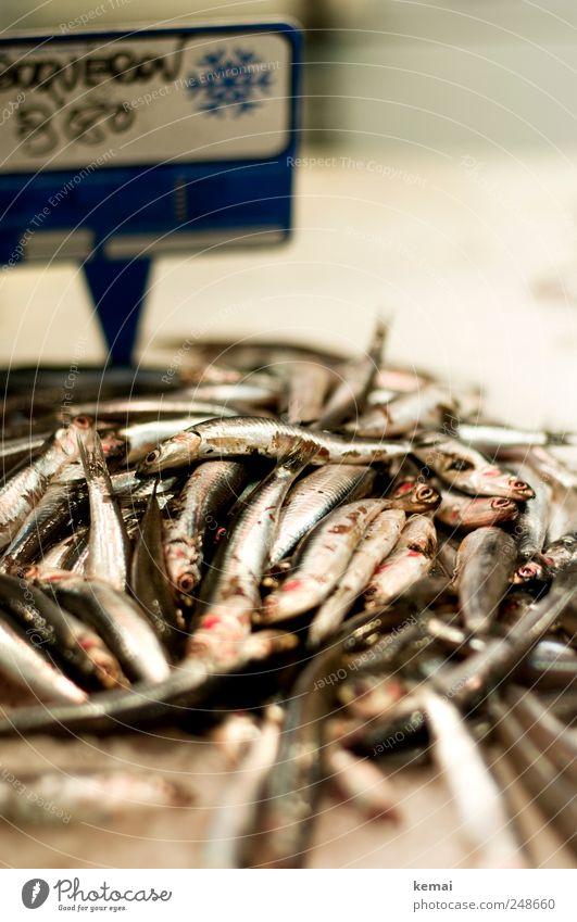 Ein Haufen Fische Meeresfrüchte Ernährung Mittagessen Abendessen Marktstand Markthalle Fischmarkt Tier Nutztier Tiergesicht Schuppen Auge liegen frisch silber