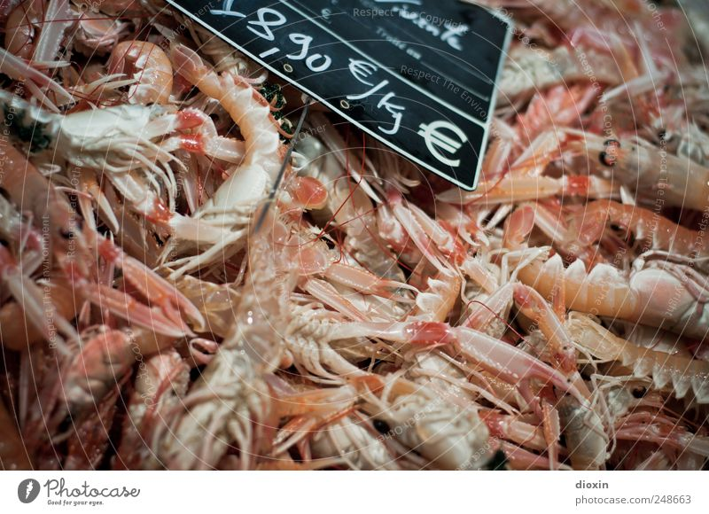 fangfrisch Lebensmittel Meeresfrüchte Ernährung Languste Garnelen Krustentier Protein Delikatesse Fischmarkt Tier Totes Tier Tiergruppe Schwarm Preisschild