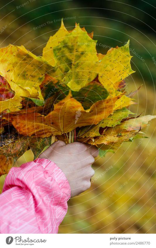 Kinderhand hällt einen Strauß aus Blättern Kleinkind Familie & Verwandtschaft Kindheit Jugendliche Hand 3-8 Jahre 8-13 Jahre Umwelt Natur Landschaft Sommer