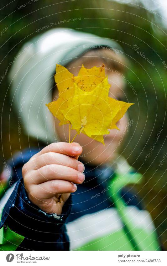 Kleiner Junge hällt gelbes Herbstblatt in der Hand Lifestyle Kind Kleinkind Finger 1-3 Jahre 3-8 Jahre Kindheit Umwelt Natur Sommer Pflanze Baum Garten Park