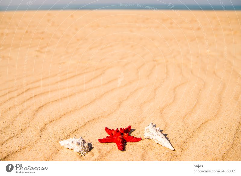 Sandstrand mit Seestern und Schnecken Ferien & Urlaub & Reisen Sommer Strand Tourismus rot Meereschnecken Gehäuse Linie blau Menschenleer einsam Sommerurlaub