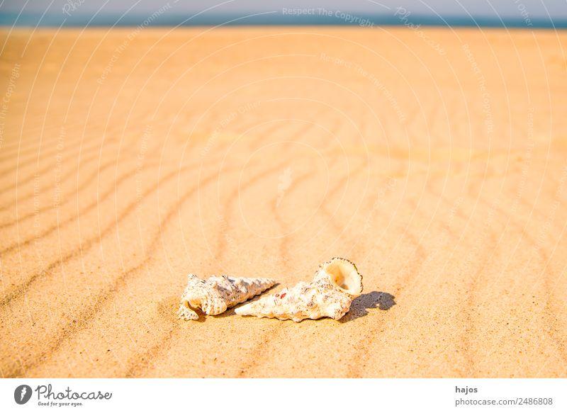 Meeresschnecken am Strand Ferien & Urlaub & Reisen Sommer Natur Sand 2 Tier Tourismus Meereschnecken Sandstrand blau Himmel Linie Reisefotografie Sonne hell