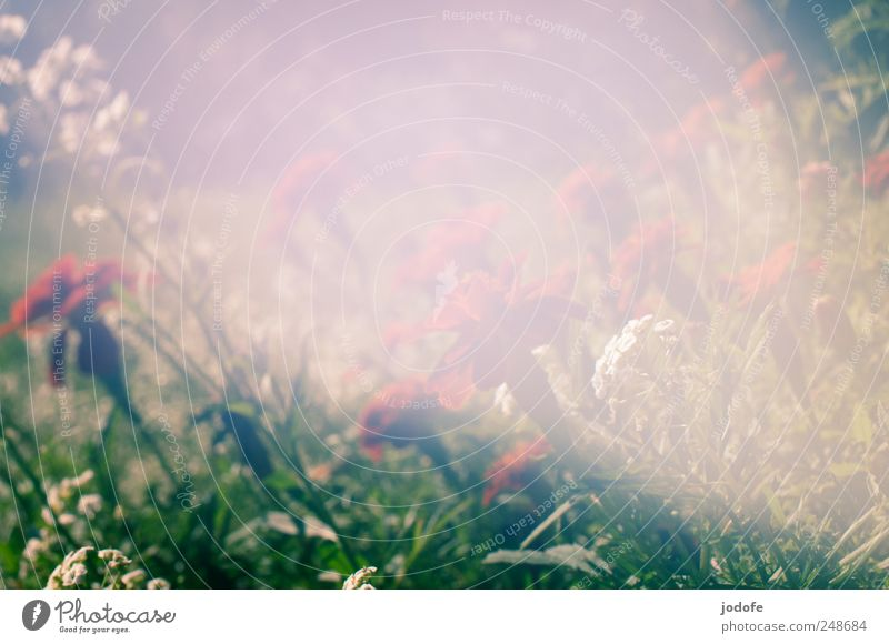 LichtEinfall Natur schön Pflanze Blume Garten Blüte Beet unklar Erkenntnis matt Lichteinfall Blumenbeet Tagetes Light leak