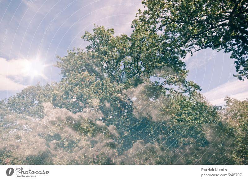 You are in the air Himmel Natur schön Baum Pflanze Sommer Wolken Freiheit Umwelt Landschaft Luft Wetter Zufriedenheit Freizeit & Hobby Wind Klima