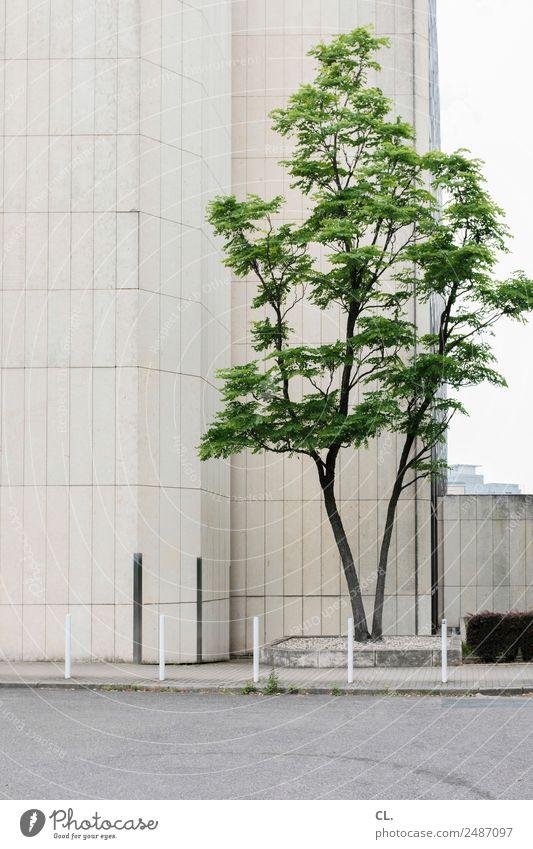 baum und beton Baum Stadt Haus Hochhaus Platz Gebäude Architektur Mauer Wand Verkehrswege Straße Wege & Pfade Poller grau grün Farbfoto Außenaufnahme