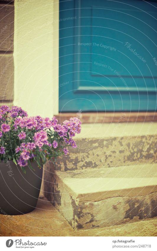 Willkommen Pflanze Sommer Blume Haus Blüte Tür Beton Treppe Fröhlichkeit Lebensfreude Schönes Wetter Riss Blumentopf