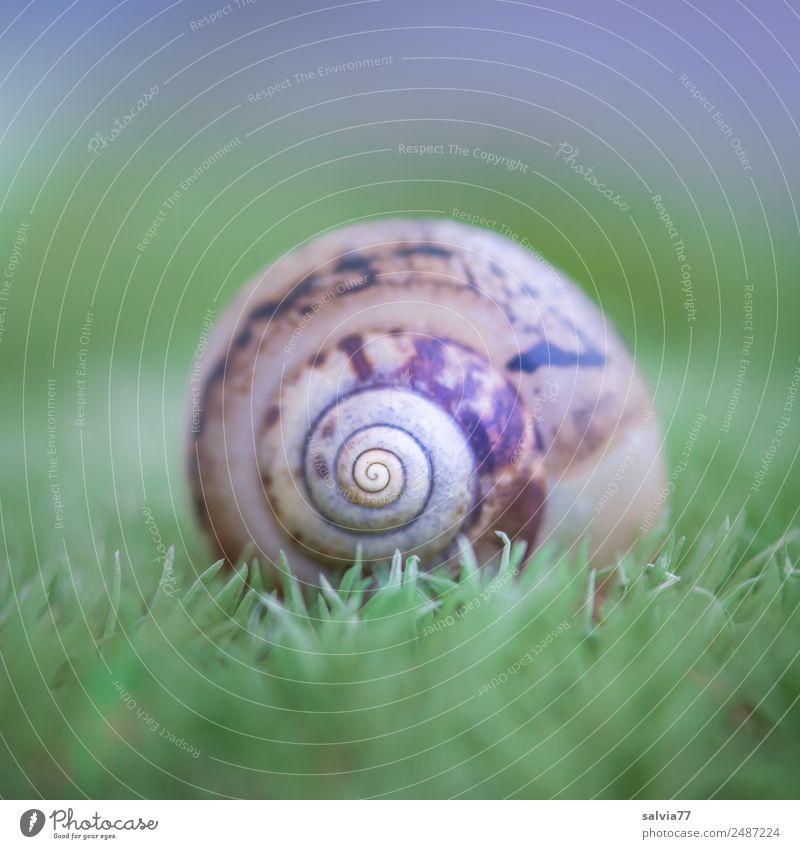 Musterhaus Natur Erde Pflanze Moos Wald Tier Schnecke Schneckenhaus Ornament rund weich braun grün Design Mittelpunkt ruhig Schutz Symmetrie Spirale Farbfoto