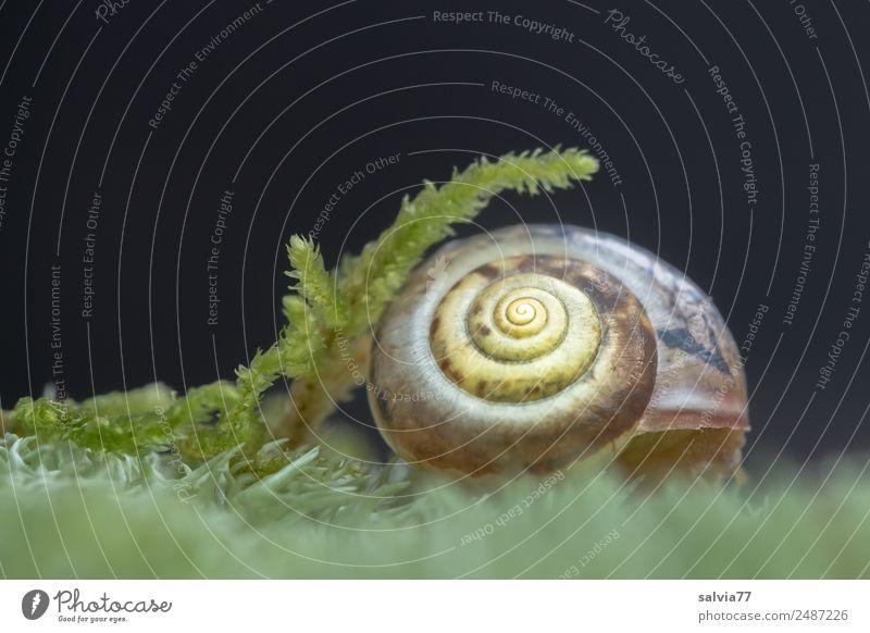 geborgen Natur Pflanze Tier Umwelt weich Schutz Moos Geborgenheit Schnecke Spirale Symmetrie filigran Schneckenhaus