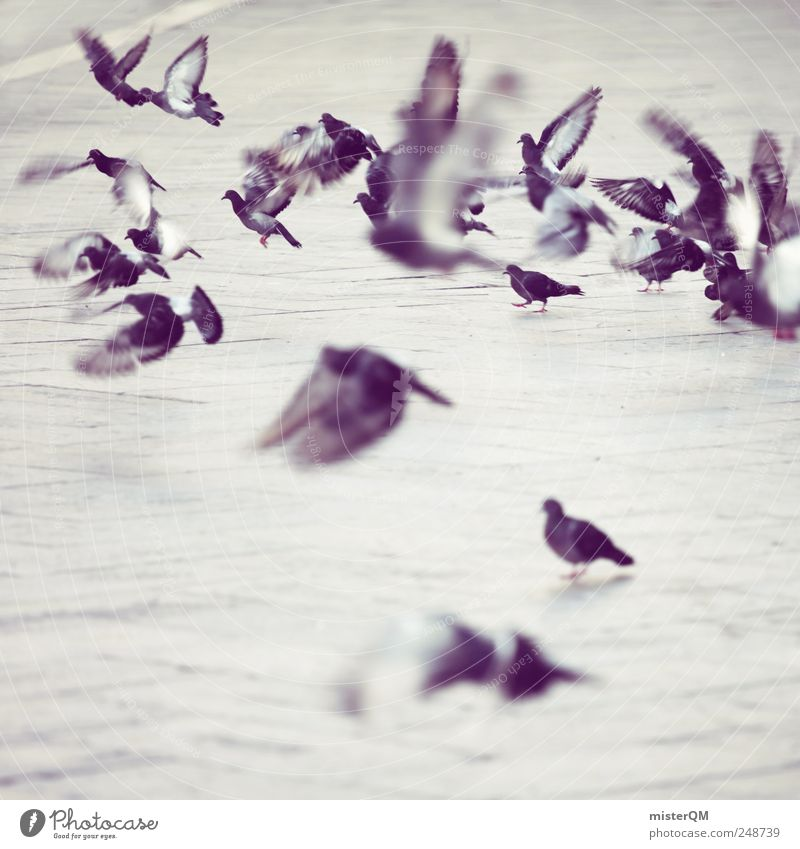 doves. Einsamkeit Tier Vogel fliegen ästhetisch trist Flügel viele Momentaufnahme Taube Surrealismus Abheben Herde traumhaft Schädlinge Alltagsfotografie